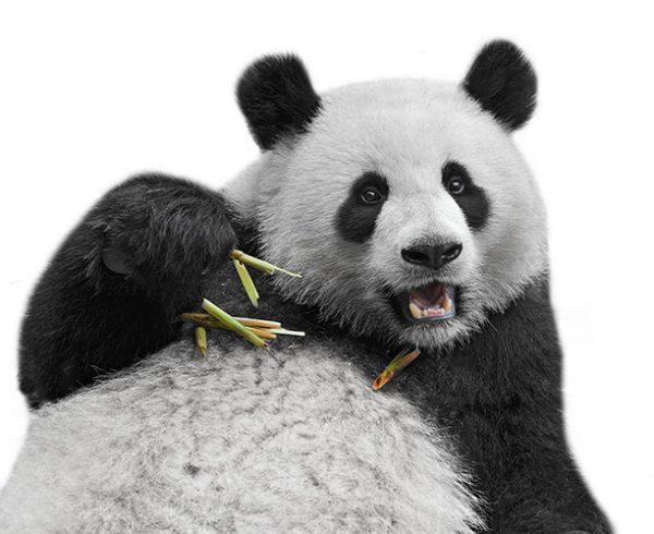 Panda Update 4.2